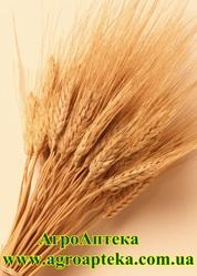 Закупаем пшеницу,  ячмень,  сою,  подсолнух,  кукурузу