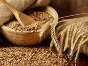 Куплю пшеницю 2, 3 кл,  фураж,  ячмінь,  ріпак,  кукурудзу